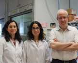 candidaalbicansbbn200618b